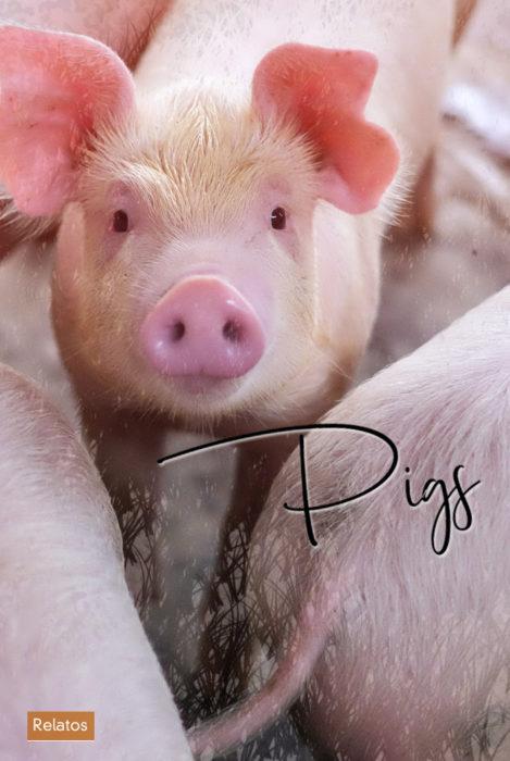 Relato. Pigs. Escritor Madrileño